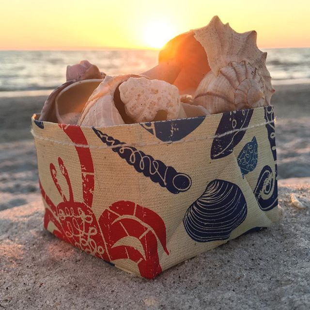 She Sells Shells in a canvas cup #shesells #canvascup #naplesbeach #beachsunset #naplesfl #gulfofmexico #naplesflorida #elvisswiftdrygoods